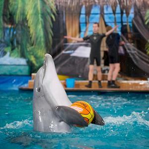 Дельфинарии, океанариумы Мильково