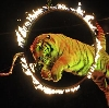 Цирки в Мильково