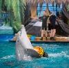 Дельфинарии, океанариумы в Мильково