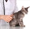 Ветеринарные клиники в Мильково